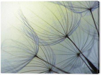 Canvas Print dandelion seed