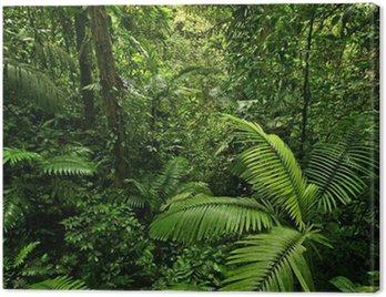Canvas Print Dense Tropical Rain Forest