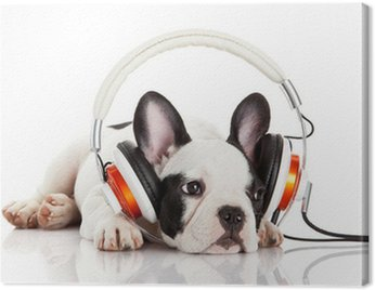 Canvas Print dog listening to music with headphones isolated on white backgro