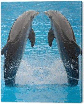 Canvas Print dolphin twins