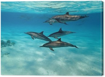 Canvas Print Dolphins in the sea