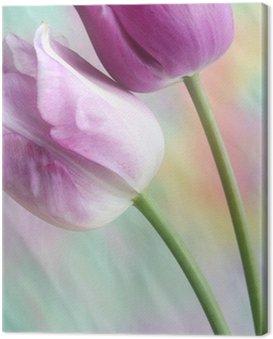 dreamy tulips