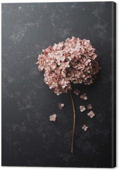 Dried flowers hydrangea on black vintage table top view. Flat lay styling. Canvas Print