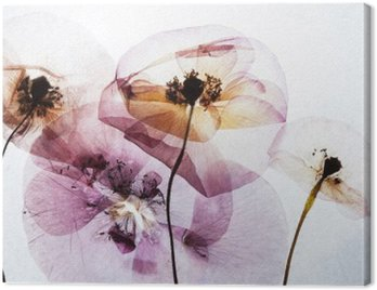 Canvas Print dry poppies