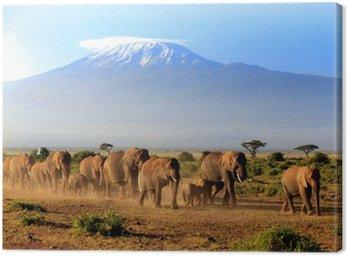 Elefanten vor dem Kilimanjaro Canvas Print