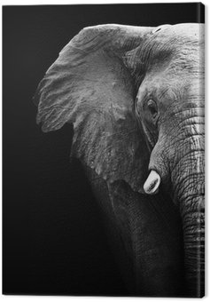 Elephant Close Up Canvas Print