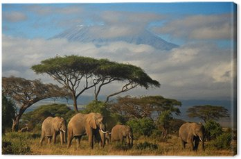 Elephant family in front of Mt. Kilimanjaro Canvas Print
