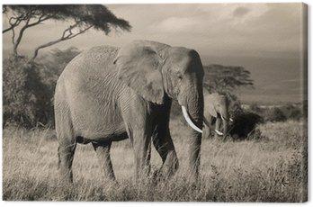 Elephant on savanna in sepia Canvas Print