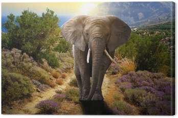 Elephant walking on the road at sunset Canvas Print