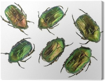 Emerald gold bugs set