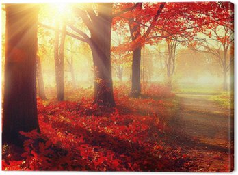 Fall scene. Beautiful autumnal park in sunlight Canvas Print