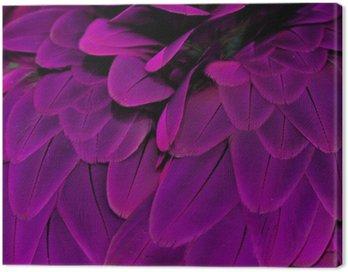 Feathers; Purple