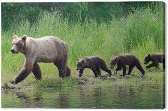 Canvas Print Female Alaskan brown bear with cubs