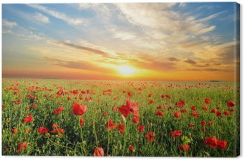 field with poppies Canvas Print