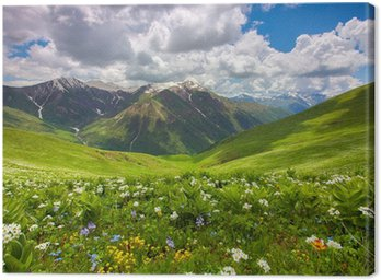 Fields of flowers in the mountains. Georgia, Svaneti. Canvas Print
