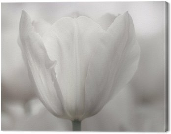 Fine art of close-up Tulips, blurred and sharp