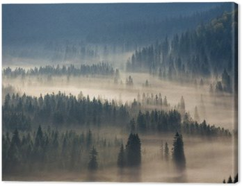 Canvas Print fir trees on a meadow down the will to coniferous forest in foggy mountains