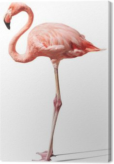 Canvas Print flamingo on white