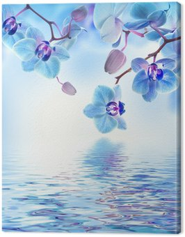 Canvas Print Floral background of tropical orchids