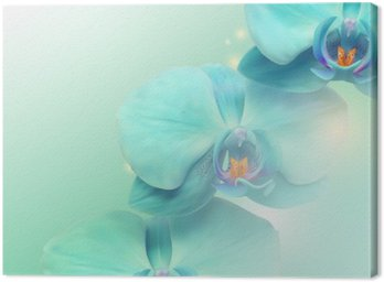 Canvas Print flower Orchid background