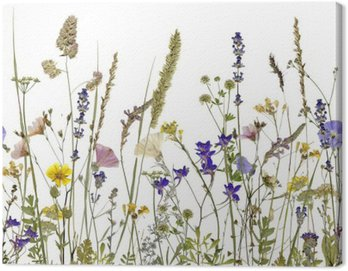 flowers and herbs. An illustration can be seamlessly connect horizontally