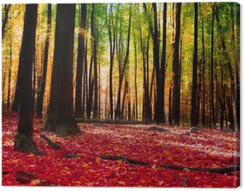 Forest in autumn with golden light Canvas Print