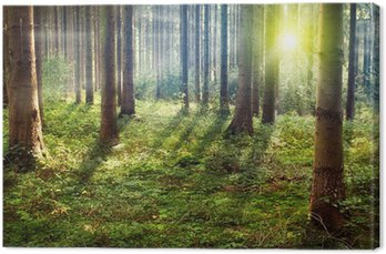 Canvas Print Forest Sunset