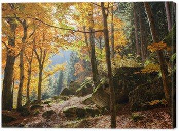 foresta in autunno Canvas Print