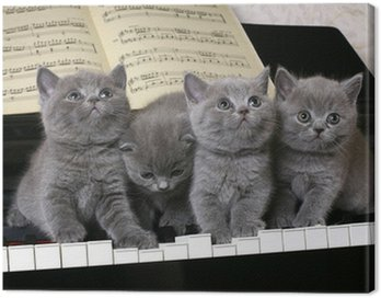 Canvas Print Four British kitten on the piano