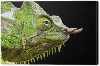 Four-horned chameleon / Trioceros quadricornis Canvas Print