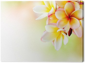 Canvas Print Frangipani Tropical Spa Flower. Plumeria. Border Design