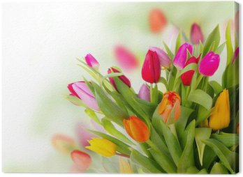 Fresh tulips bouquet Canvas Print