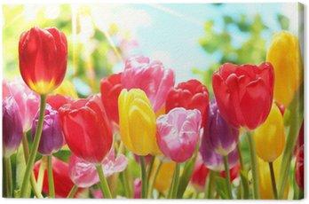 Fresh tulips in warm sunlight