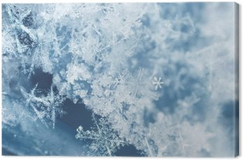 Frosty snow flakes Canvas Print