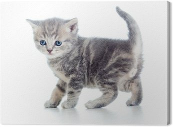 Canvas Print funny walking kitten isolated on white