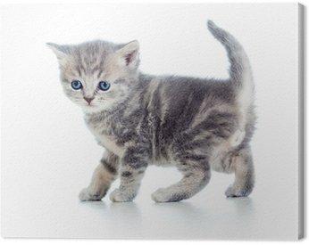 funny walking kitten isolated on white