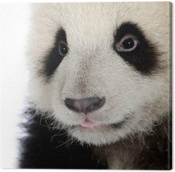 Giant Panda (6 months) - Ailuropoda melanoleuca Canvas Print