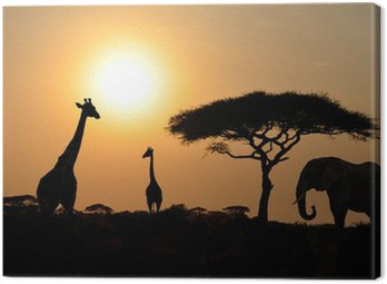 Giraffes and Elephant with Acacia tree with Sunset