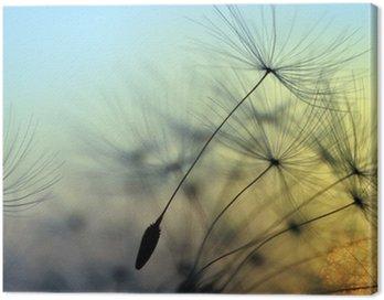 Canvas Print Golden sunset and dandelion, meditative zen background
