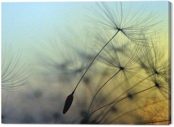 Golden sunset and dandelion, meditative zen background Canvas Print