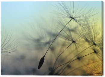 Canvas Print Golden sunset and dandelion, meditative zen background