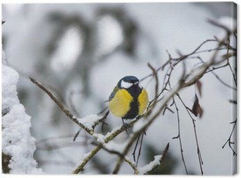 Great tit on a branch Canvas Print