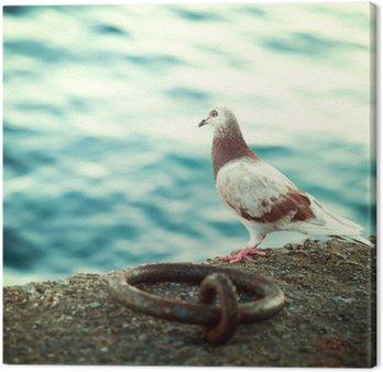 Greek dove on the promenade in Crete, impressions of Greece
