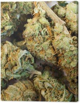 Canvas Print Green Buds Marijuana Plant Flowers Cannibis Natural Medicine