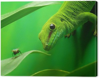 green gecko lizard Canvas Print