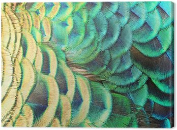 Green Peacock feathers