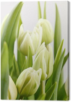 green tulips Canvas Print