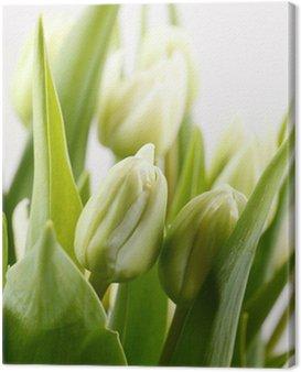 Canvas Print green tulips
