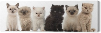 Canvas Print Group of British shorthair and British longhair kittens