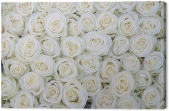 Canvas Print group of white roses after a rainshower